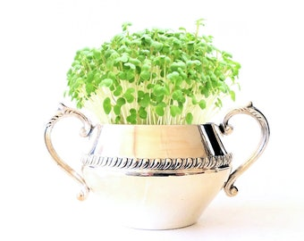 DIY Microgreens Garden Kit in Vintage Sheridan Silver Sugar Bowl Planter - Complete Growing Kit includes Planter, Organic Seeds and Soil Mix