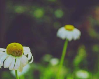Wild daisies, vintage vibe