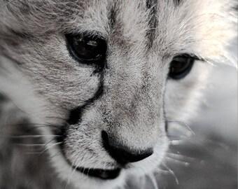 Baby Cheetah Photograph - Black and White Animal Photography - Cute Wildlife Photo - South Africa Fine Art Print  - 5x7 8x10 8x12 Wall Art