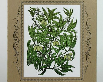 ALMOND TREE Illustration  - Hand Printed Letterpress Print in Kraft Vignette