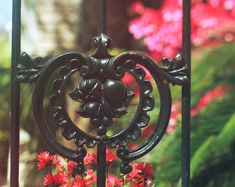 """New Orleans Art - Garden District """"Garden Iron"""" Fine Art Photography - wrought iron gate, flowers, lush - home decor wall art"""