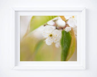 Nature photo prints - Spring blossom photography - Flower picture - White and green wall art - Nature home decor - Floral print - Botanical