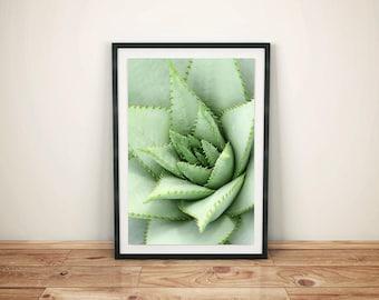 cactus print ,botanical print ,  cactus wall art  , cactus printable art ,cactus photography  , cactus wall art , cactus poster ,