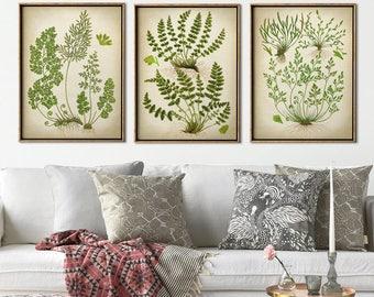 FERN BOTANICAL Print SET of 3 Art Posters, Botanical Set, Fern Moss Print Set, Mosses,  Wall Decor, Green Plants Art, Forest,