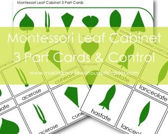 Montessori leaf Cabinet 3 Part Cards PDF