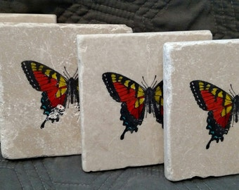 Swallowtail Butterfly Coasters