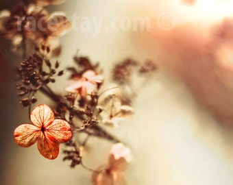 Flower Photography, Hydrangea, Orange, Peach, Beige, Shabby Chic Baby Girl Nursery Decor, Flower Photo
