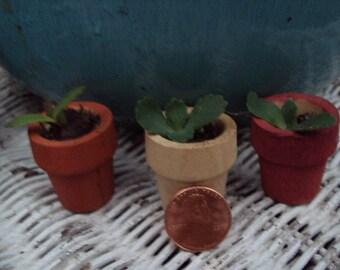 Miniature Succulent plant Kit- Fairy Garden live Plant kit, Miniature Wooden Planter For Fairy Gardens, Terrariums, Mini Gardens