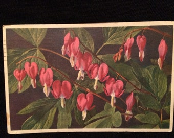 Pink Bleeding Heart Flowers  - Plant - Botanical - Spring Flower - Vintage Postcard