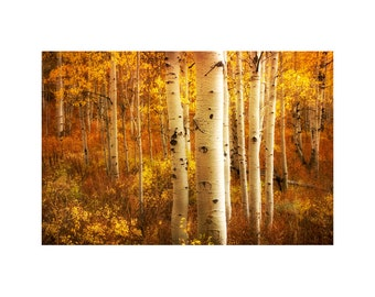 Aspen Forest Photo, Rustic Home Decor, Autumn Colors, Rich Gold, Fall Leaves