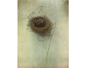 Birds Nest Photograph, Still Life Photography, Rustic Wall Decor, Nature Photography, Vintage Inspired Print, Bird Nest Print