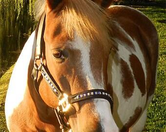 Fully Custom Halter Bling Halter Beaded Halter Custom Tack Padded Leather Halter Pony Cob Draft Horse Lovers Gift Warmblood Full Oversize