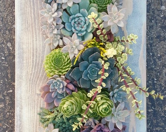 "28"" x 12"" Framed Succulent Vertical Garden-Made to order!"