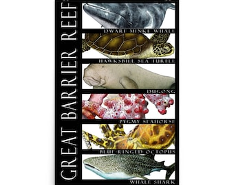 Animals of the Great Barrier Reef Poster