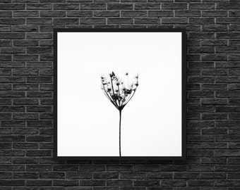 Minimalist Photo - Botanical Print - Herb Photo - Plants - Square Photo - Black White Wall Art - Botanical Wall Decor - Living Room Decor