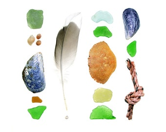 Beachcombing series No.72 - photograph - Crab shell, mussels, sea glass, gull, Maine feather