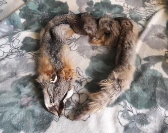 Velvir the Grey Fox