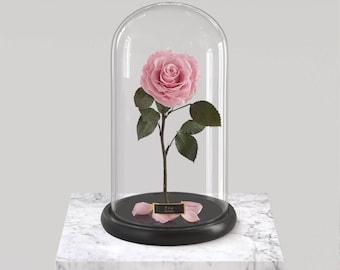 Beauty and the Beast,Beauty and the Beast Rose,Beauty Beast,Beauty Beast Rose,Enchanted Rose,Disney Belle Rose,Forever Rose,Rose in Dome