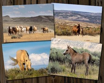 Sand Wash Basin Wild Horse 5x7 Cards - Set of 4, Northwest Colorado, Wild Mustangs, Corona's band, Wild Stallions, Wild Mustang Colt Diablo