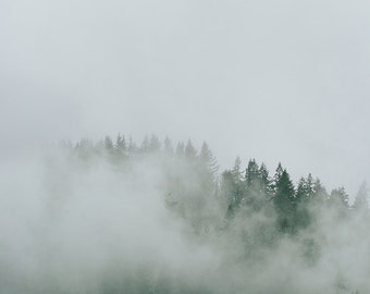 "Mountain Fog and Trees Photo, Pacific Northwest, Evergreen Trees, Fine Art Landscape Photography, Adventure, ""Mountain Trees and Fog"""