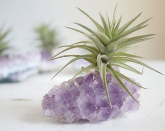Amethyst Crystal Air Plant, Geode Planter, Crystal Garden, February Gift For Her, Mom, Friend, Little Something Under 20, Spring Decor