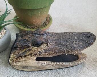 Alligator, taxidermy head