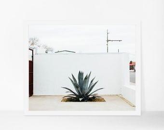 Succulent Photography, Minimalist Art Print, Marfa Texas Photograph, Botanical Print, Minimalist Home Decor, Contemporary Art, Custom Size