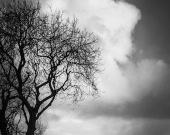 Irische Baum Print - Irland Landschaft schwarz-weiß Fotografie - Nordirland