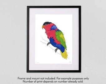 Black-Capped Lory - Limited Edition - A3 fine art giclée print