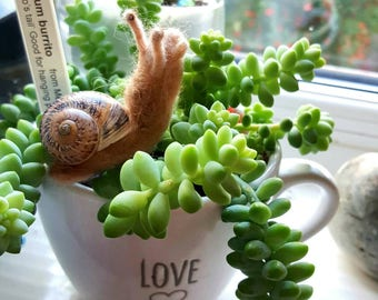 Needle felted snail in a real snail shell