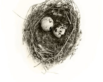 """Nest 1, 16""""x21"""" Photograph on archival paper with hand deckled edge. Signed in pencil"""