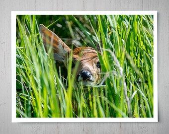Peekaboo Deer - Animal Photography, Archival Giclee Print, Wildlife Photo - Multiple Sizes Available