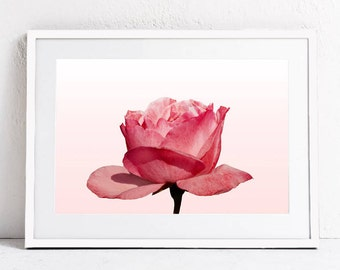 Blush Pink Wall Art Print, Floral Print Wall Art, Pink Rose Print, Floral Digital Art Print,  Flower Photo Print, Botanical Print Download