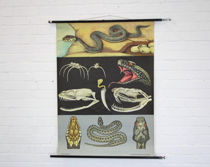 Mid Century Wall Chart Of The Snake By Jung Koch Quentell