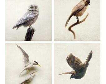 SALE  Bird Prints, Nature Prints, Set of 4 Prints, Nature Lover Gift, Bird Wall Art Prints, Minimalist Art, Neutral Wall Decor