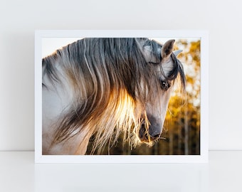 Horse Photography, Horse Wall Art, Equine Print, Andalusian, Horse Photo, White Horse, Picture, Sunshine, Golden, Fine Art