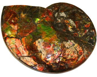 Canadian Ammonite Fossile. Colorfull.