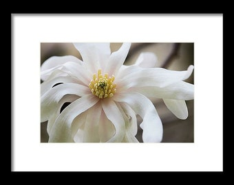 Professional Print of Fragrant Bloom Photography by Sherry Walker