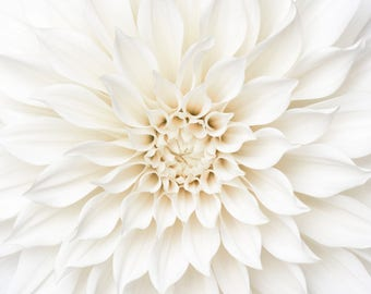 Flower Photography - White Dahlia Detail, Floral Still Life Photography, Botanical Wall Decor, Neutral Decor, Large Wall Art