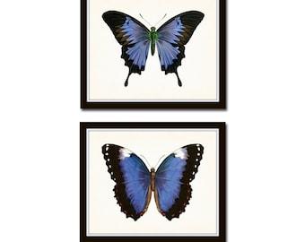 Vintage Blue Violet Butterfly Print Set No. 5, Butterfly Print, Butterflies, Art Print, Giclee, Art, Print Set, Butterfly Prints, Insect Art