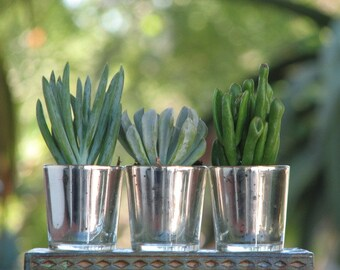 2 Samples Wedding Favors Mini plants in Silver Glass Containers