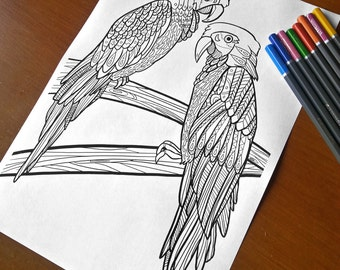 Adult Zentangle Coloring Sheet Parrots