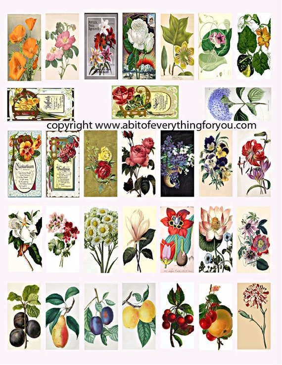 "vintage garden flowers fruit art clipart digital download domino collage sheet 1"" x 2"" inch graphics images printables pins pendants magnets"