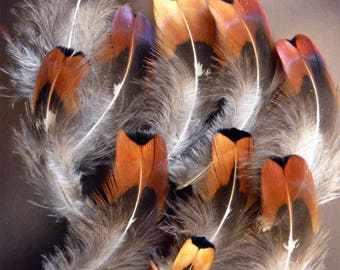 Natural dark Tan pheasant feathers