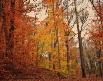 The Splendor Of Autumn, Autumn, Fall, Autumn colors, Fall Colors, Autumn Print, Fall Print, Tyler State Park, Photo, Canvas, Wall Art, Print