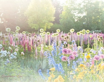 Flower Photography - Magical, Dreamy, Romantic Nature Photography, Iris Garden, Pink and Blue, Landscape, Wall Decor Decor