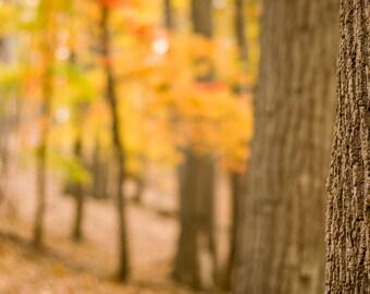 Digital Download: Autumn forest photo