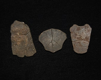 Set of Fossilized Turtle Shell Sections Pleistocene 10,000 - 1.8 million Years