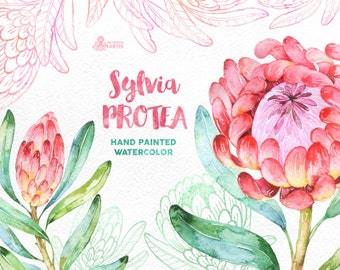 Sylvia Protea. Watercolor floral Clipart, wedding invitation, floral, tropical bridal, african, greetings, diy clip art, flowers, frame
