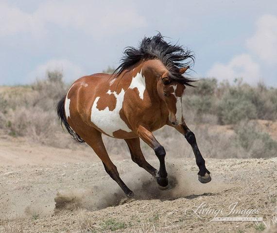 Wild Mare Runs Fine Art Wild Horse Photograph Wild Horse